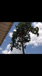 Man Working On Tree