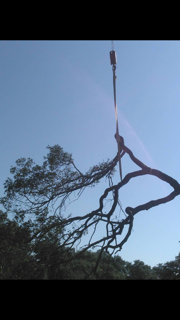 Crane Carrying Large Tree Branch