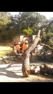 Tree Being Put In Wood Chipper